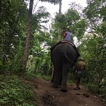 Photo de Elephant Junction - Day Tours