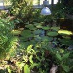 Photo de Conservatory and Botanical Garden of the City of Geneva(Conservatoire et Jardin botaniques de la Ville de Geneve)