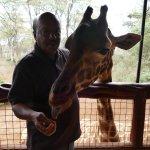 Giraffe feeding with hand around the neck