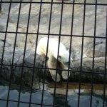 Photo de Asahiyama Zoo