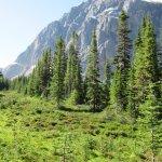Photo de Mt. Edith Cavell