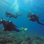 Welcome to the wonderful world of Scuba Diving !!