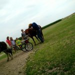 Horse ab buggy rides for children