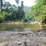 Photo de Taman Negara National Park