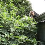 Foto de El Jardin at Monteverde Lodge & Gardens