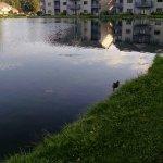Tamarack & Mirror Lake, a Festiva Resort Foto