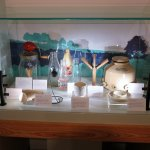 St Barbe's Museum - display case