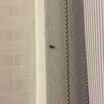 Roaches present in guest room