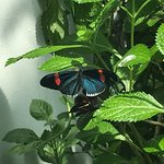 Photo of Key West Butterfly and Nature Conservatory