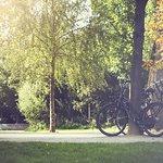 Bikes resting in Vondelpark