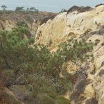 Photo de Torrey Pines State Natural Reserve