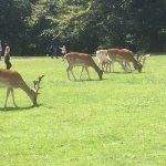 Deer in the gardens