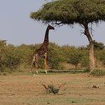 Photo de Kicheche Bush Camp