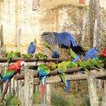 Perroquets dans la volière sud-américaine