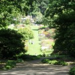 A view from in the trees looking to the floral garden area