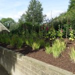 One of the newly planted beds
