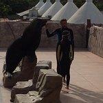 Sea lion experience