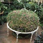 Gaylord Opryland Resort Gardens Foto