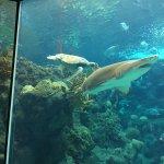 The Florida Aquarium Photo