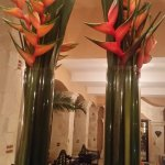 Beautiful birds of paradise in the hotel lobby!