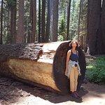 Photo of Calaveras Big Trees State Park