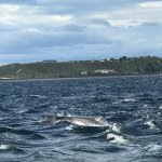 Photo of Chanonry Point