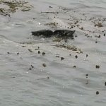 One of the visitors during our last visit to Tidal Raves.