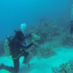CDC Dive instructor showing off his cucumber wrangling skills.