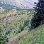 Centennial Ridge Trail