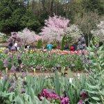 NC is full of great flowering trees