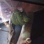 Living snakes