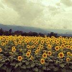 Foto de Akeno Area
