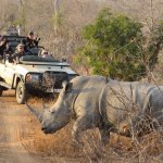 A typical encounter on a game drive
