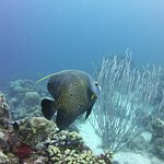 Atlantis Diving