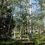 Learn about Aspens