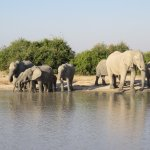 Chobe National Park - from the vehicle.