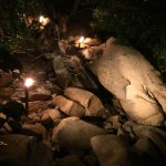 Photo of Rhythms of the Night by Vallarta Adventures