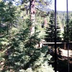 Panoramic view from a Treetop Platform.