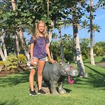 leaving the lei with a hippo