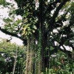 Jungle tree