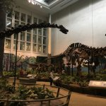 Photo de Carnegie Museum of Natural History