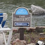 The Lobster Pot Pool