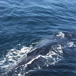 Had a great whale watch! Saw 25 humpback whales!