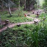 Woodland walk at Conkers