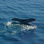 Brisbane Whale Watching Foto