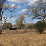 Photo of Nkorho Bush Lodge