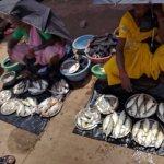karwar market selling fresh fish