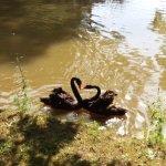 les gardiens de l'étang