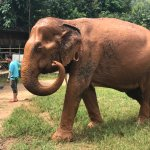 Our freshly bathed elephant!!!!