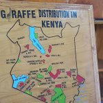 Giraffe care and Distribution